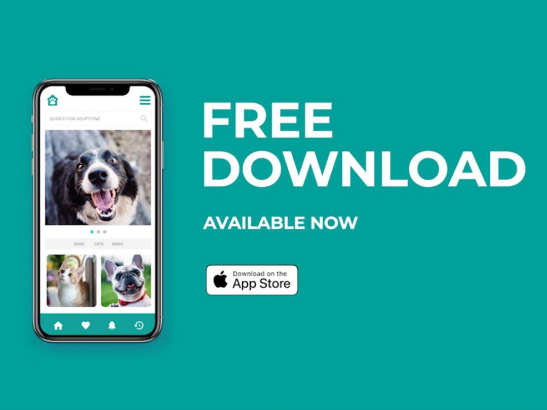 Paw House App Video